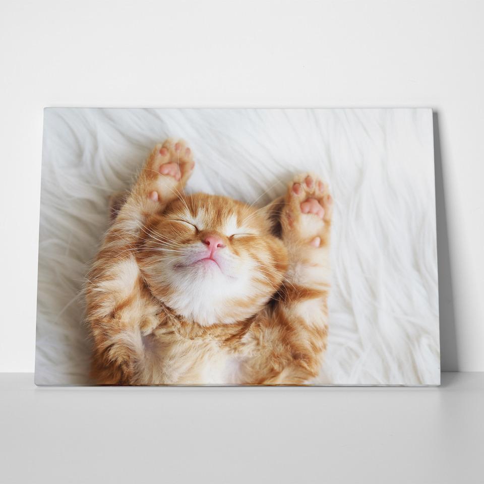 Πίνακας SLEEPING CAT