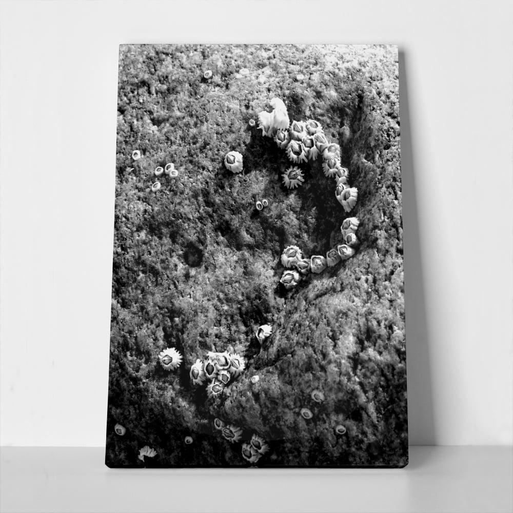 Πίνακας BLACK & WHITE BARNACLES